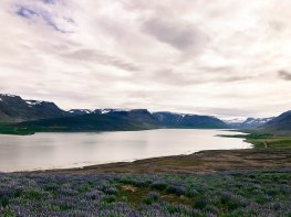 One of the many western fjords